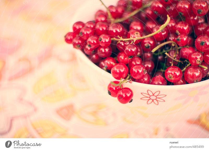 Johannisbeeren Natur Pflanze Sommer rot gelb Leben Herbst Gesunde Ernährung klein Gesundheit rosa Lebensmittel Frucht frisch genießen