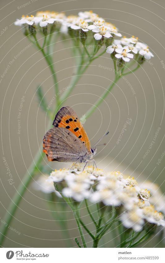 Hochparterre grün weiß Pflanze Tier braun orange Wildtier Schmetterling