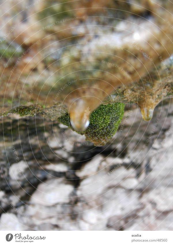 Tropfen vorm Fallen Natur Stein Wassertropfen Felsen Schleim Vordergrund