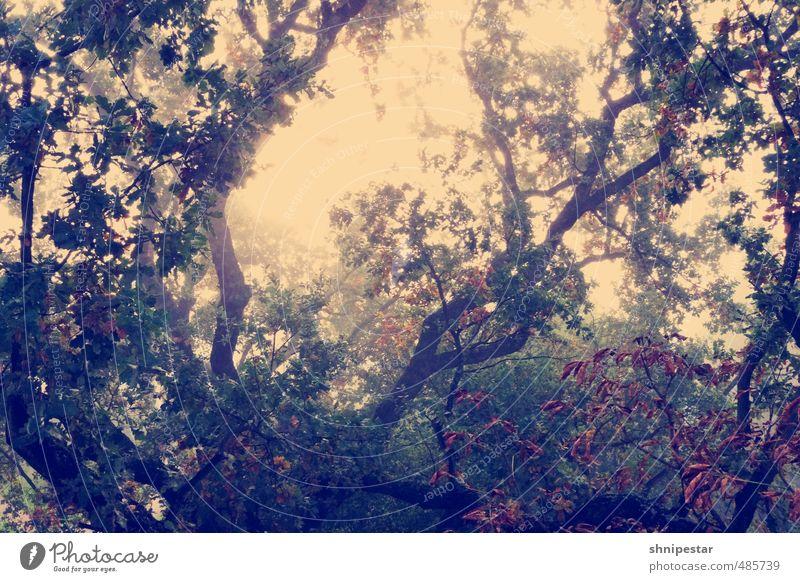 Autumn Tactics Himmel Natur Pflanze Baum Sonne Erholung Landschaft Wald Umwelt Herbst Berlin Garten Wetter Nebel Dekoration & Verzierung gold