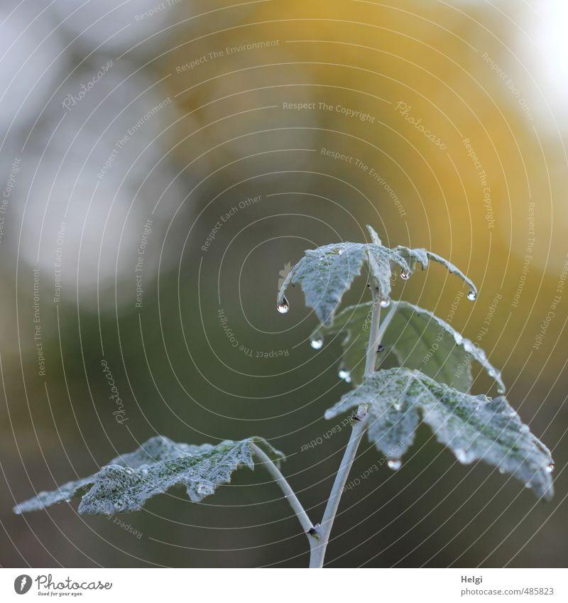 Morgentau... Natur grün Pflanze ruhig Blatt gelb kalt Umwelt Herbst grau außergewöhnlich Stimmung Park glänzend Wachstum Sträucher