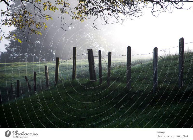 Grund und Boden Umwelt Natur Landschaft Herbst Wiese Feld kalt natürlich grün Zaun Zaunpfahl Farbfoto Außenaufnahme Menschenleer Sonnenlicht Sonnenstrahlen