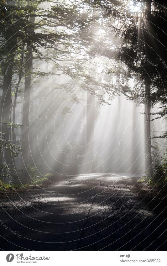 Nebelgrenze Umwelt Luft Herbst Baum Wald außergewöhnlich dunkel natürlich Farbfoto Gedeckte Farben Menschenleer Morgen Lichterscheinung Sonnenlicht