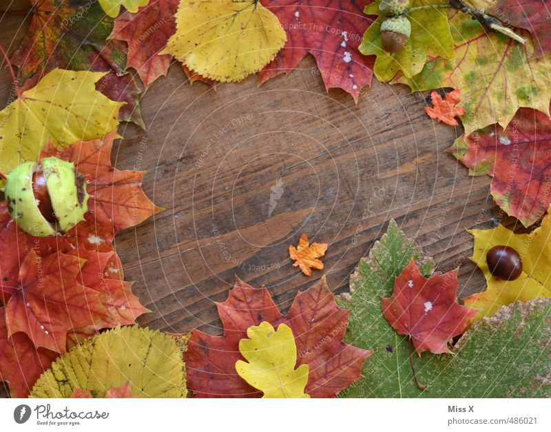 Rahmen II Blatt Herbst Holz Hintergrundbild Dekoration & Verzierung Stillleben Herbstlaub Sammlung herbstlich Ahornblatt Basteln Herbstfärbung Herbstbeginn