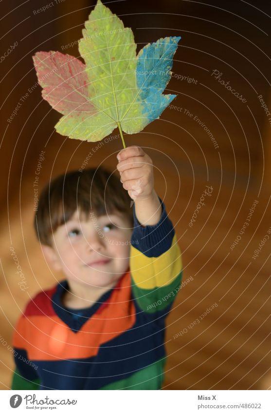 Herbst Herbst Hurra!!! Mensch Kind Farbe Freude Gefühle Farbstoff Junge Spielen Glück Stimmung Freizeit & Hobby Kindheit Dekoration & Verzierung Fröhlichkeit