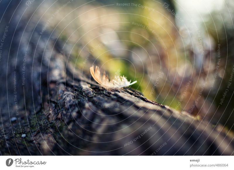 Feder Ast Baum Baumstamm Baumrinde Oberfläche natürlich weich Farbfoto Außenaufnahme Nahaufnahme Menschenleer Tag Schwache Tiefenschärfe