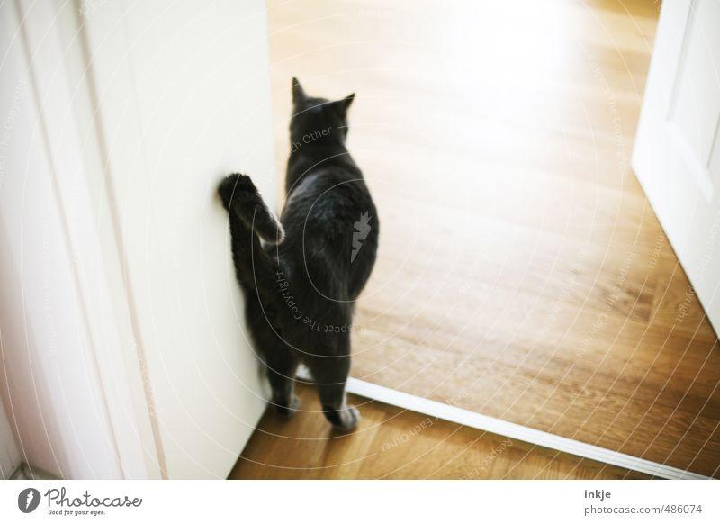 Haus | tier Tier Gefühle Wohnung Raum Tür Zufriedenheit Häusliches Leben warten stehen Neugier Küche Gelassenheit Haustier Wohnzimmer Geborgenheit Interesse