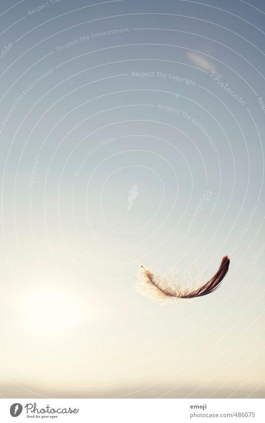 fly away Tier Himmel Wolkenloser Himmel Sommer Schönes Wetter Feder blau Zufriedenheit Lebensfreude Leichtigkeit leicht Symbole & Metaphern Farbfoto