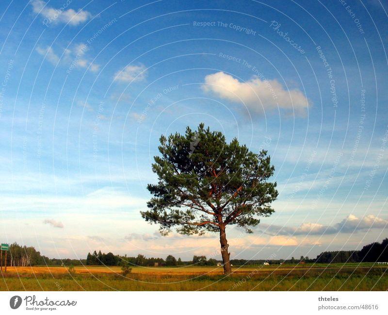 arvore Arvore Planta Himmel Licht sky ceu light nicon
