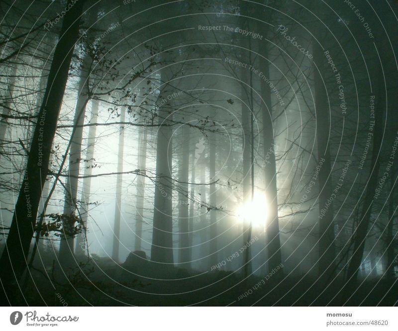 und dann kam das Licht Wald Nebel Herbst mystisch Holzmehl Beleuchtung fog light autum