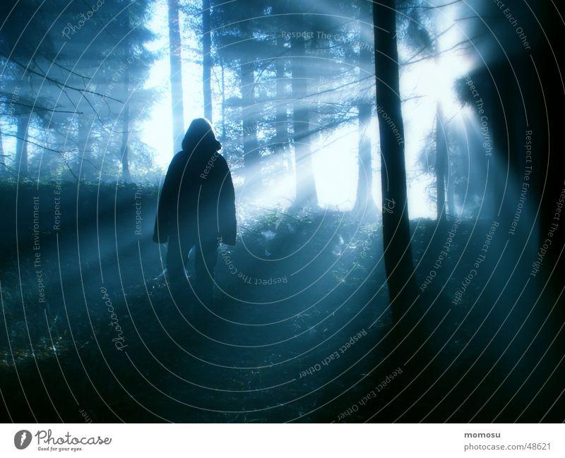 Erleuchtung Mensch Sonne Wald Herbst Beleuchtung Nebel