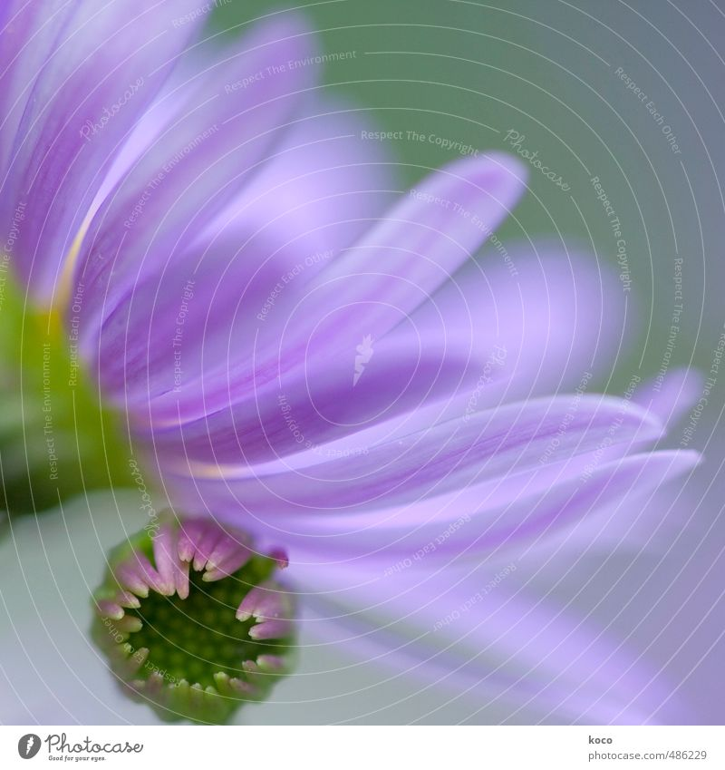 sometimes in spring ... Natur blau grün Pflanze Sommer Blume feminin Frühling Blüte klein Glück träumen rosa Idylle Wachstum Schönes Wetter