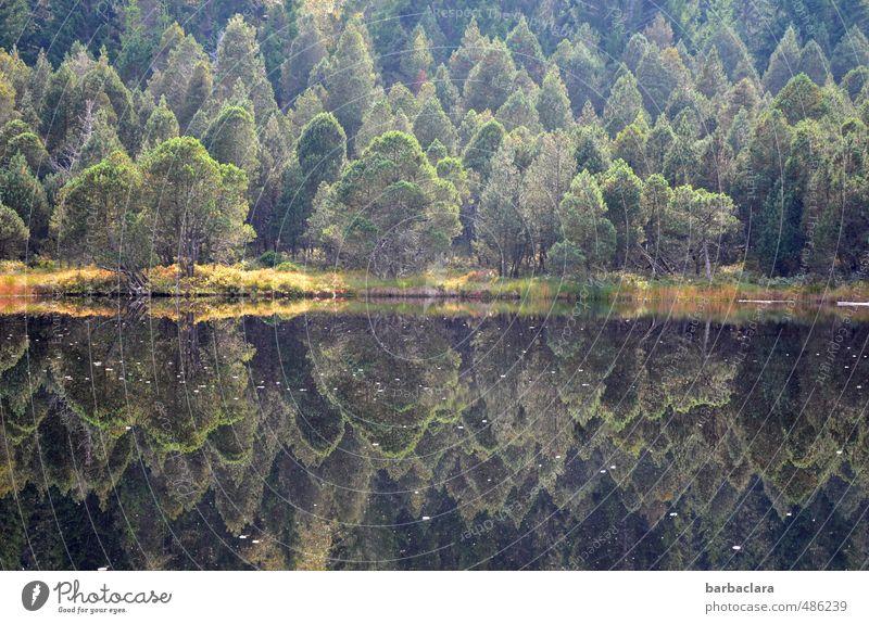 Spiegelungen | Blindensee Landschaft Erde Wasser Herbst Baum Wald Seeufer dunkel frisch viele wild grün Stimmung ruhig Einsamkeit ästhetisch Erholung Farbe