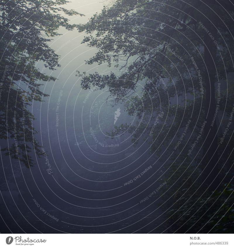 Sichtbar Nebelig Natur blau grün Wasser Pflanze Baum Erholung Einsamkeit Wald dunkel Traurigkeit Herbst Park Trauer gruselig