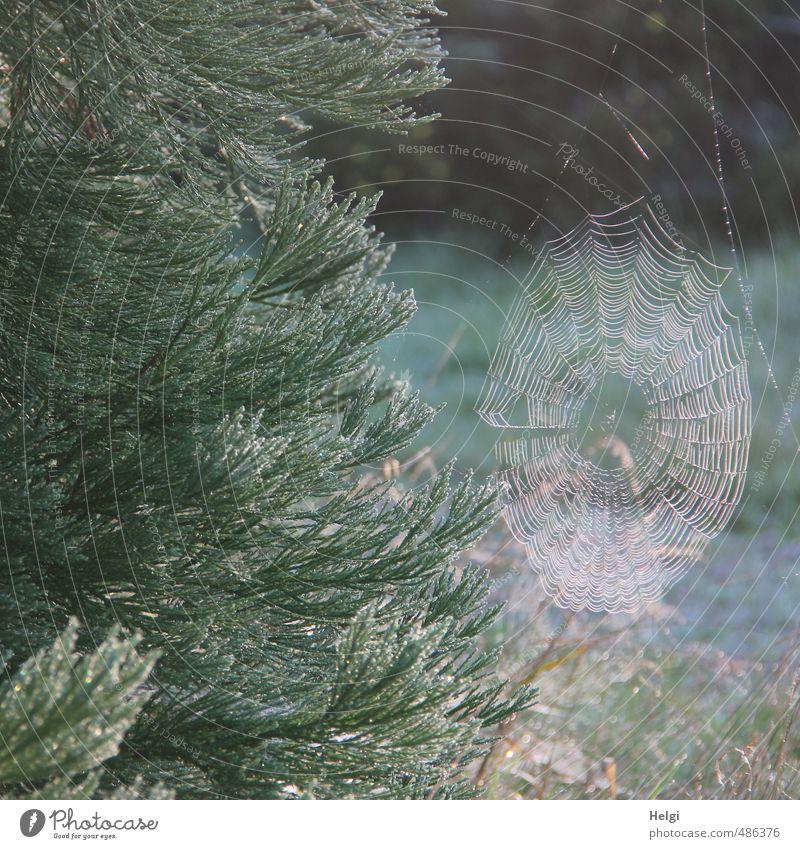 Netzwerk... Umwelt Natur Pflanze Herbst Schönes Wetter Sträucher Grünpflanze Park Spinngewebe Spinnennetz leuchten Wachstum ästhetisch authentisch einfach