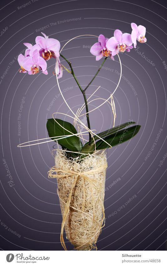 Orchidee 1 Blume Vase Dekoration & Verzierung