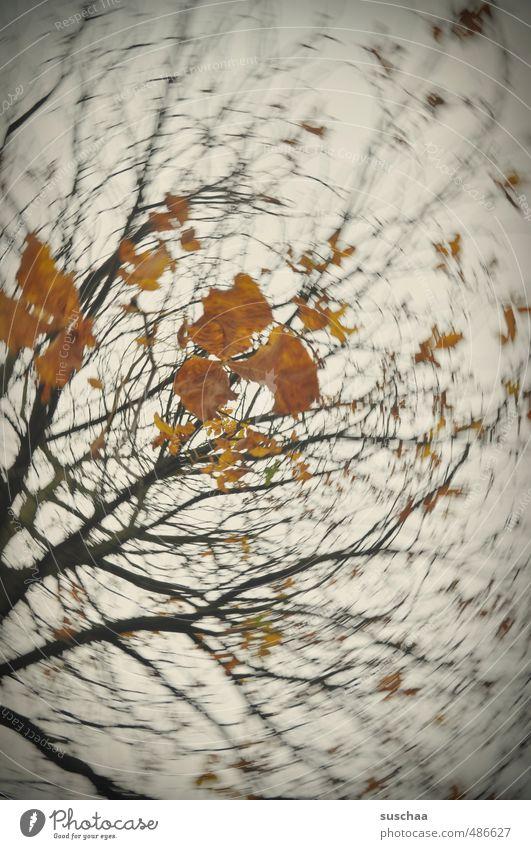 bald ist es wieder soweit .. Kunst Herbst Baum Blatt Holz dunkel orange Dynamik rotieren Politische Bewegungen Farbfoto Gedeckte Farben Außenaufnahme Experiment