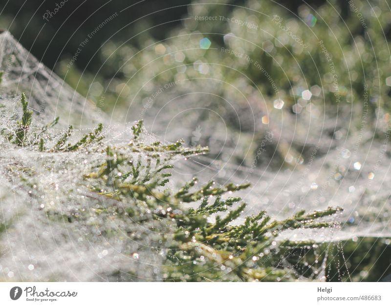 Gespinst... Umwelt Natur Pflanze Herbst Sträucher Garten glänzend ästhetisch authentisch außergewöhnlich einzigartig kalt natürlich grau grün weiß Stimmung