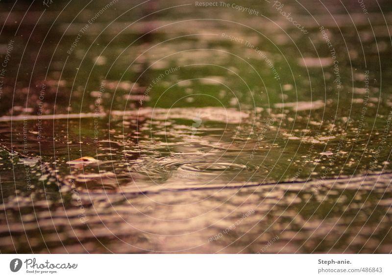 Regen Natur grün Wasser Farbe ruhig Umwelt natürlich rosa glänzend authentisch frisch nass Wassertropfen Kreis berühren