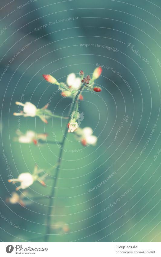 Mama´s Garten Umwelt Natur Pflanze Sommer Blume Blatt Blüte Nutzpflanze Blühend Duft leuchten ästhetisch dünn frisch natürlich Wärme weich grün Außenaufnahme
