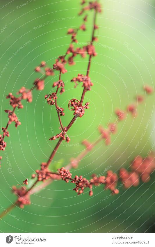 Mama´s Garten Umwelt Natur Pflanze Sonnenlicht Sommer Blume Blatt Blüte Park Blühend Duft leuchten frisch hell natürlich grün rot Farbfoto Außenaufnahme