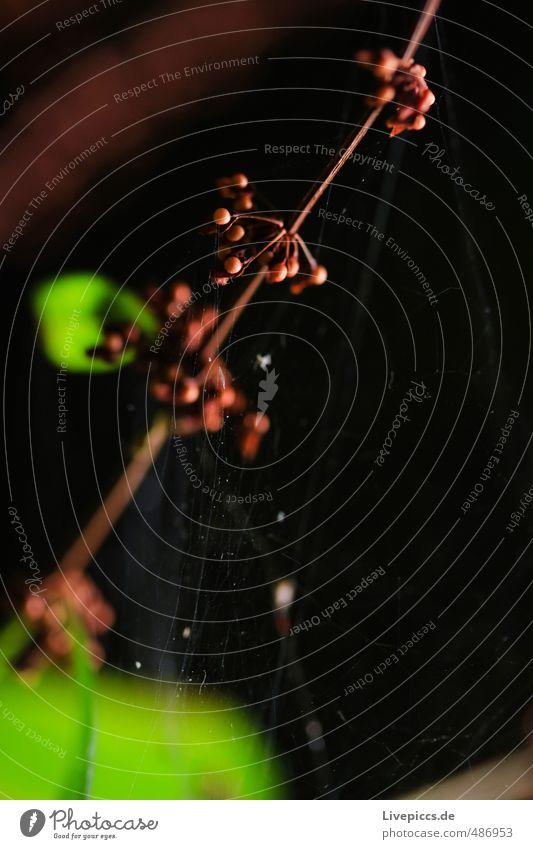 Mama´s Garten Umwelt Natur Pflanze Sonnenlicht Sommer Blume Gras Sträucher Blatt Blüte Wildpflanze Park Wiese Blühend Duft leuchten dünn natürlich grün rot