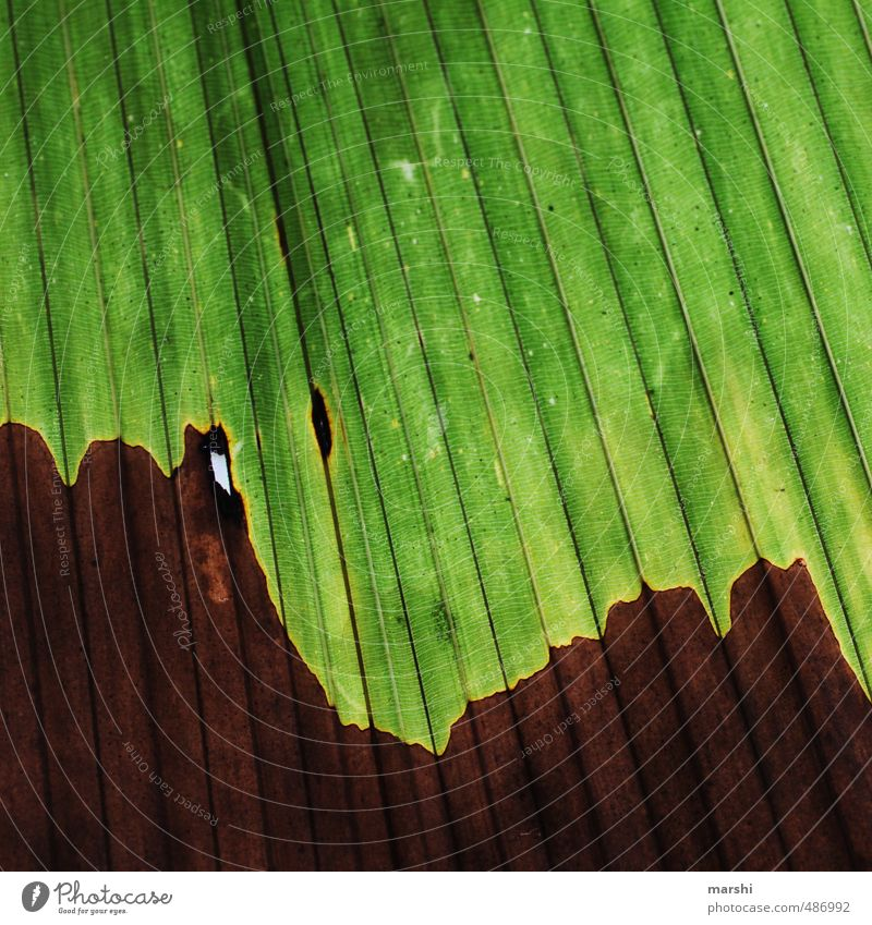 jung & alt Natur Pflanze Blatt Grünpflanze Wildpflanze braun grün Palme Palmenwedel Furche abstrakt Farbfoto Außenaufnahme Nahaufnahme Detailaufnahme