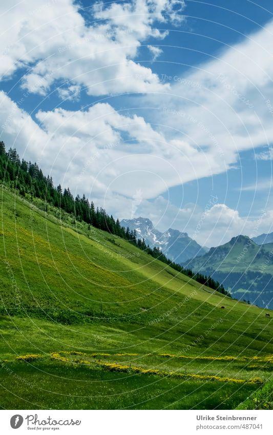Ganz schön schräg Umwelt Natur Landschaft Pflanze Himmel Wolken Sonnenlicht Sommer Schönes Wetter Baum Gras Wiese Alpen Berge u. Gebirge Bundesland Vorarlberg