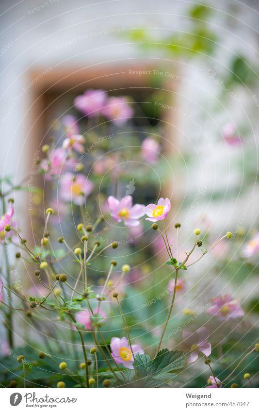 Billy Idyll schön Pflanze Blume Blatt Blüte Garten Geburtstag Grünpflanze Anmut Muttertag Blumenbeet