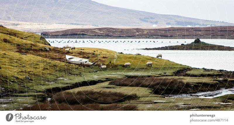 Land in Sicht Natur Landschaft Herbst Klimawandel Wetter Wind Gras Sträucher Wiese Feld Hügel Seeufer Meer Insel Moor Sumpf Republik Irland Fischerdorf