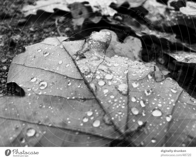 Überreste Herbst Blatt Wassertropfen Regen Tau Seil konstraste Schwarzweißfoto Natur