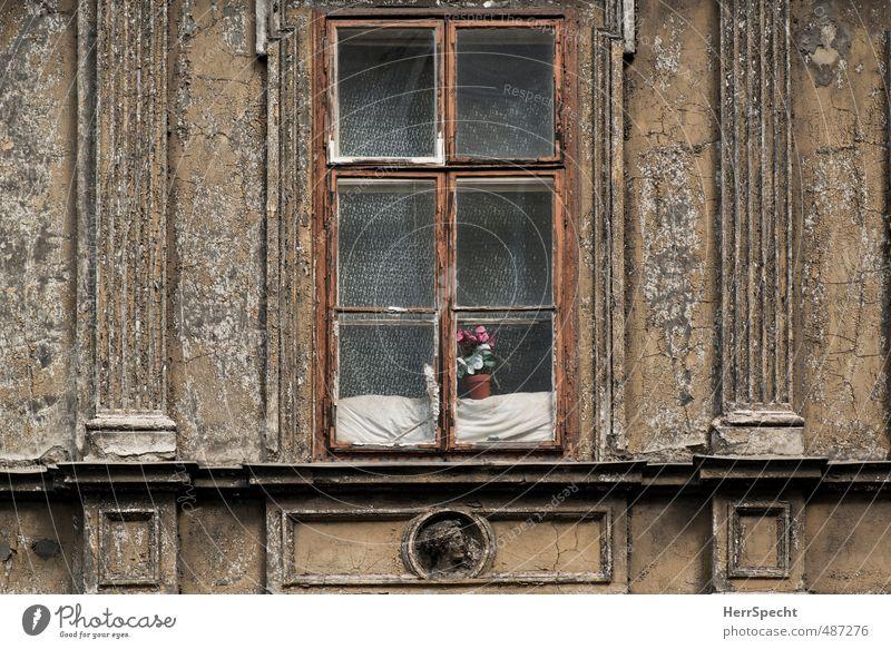 Tristesse mit Blümchen Stadt alt Blume Haus Fenster Architektur Traurigkeit Gebäude Fassade trist Armut historisch Bauwerk unten Verzweiflung Nostalgie