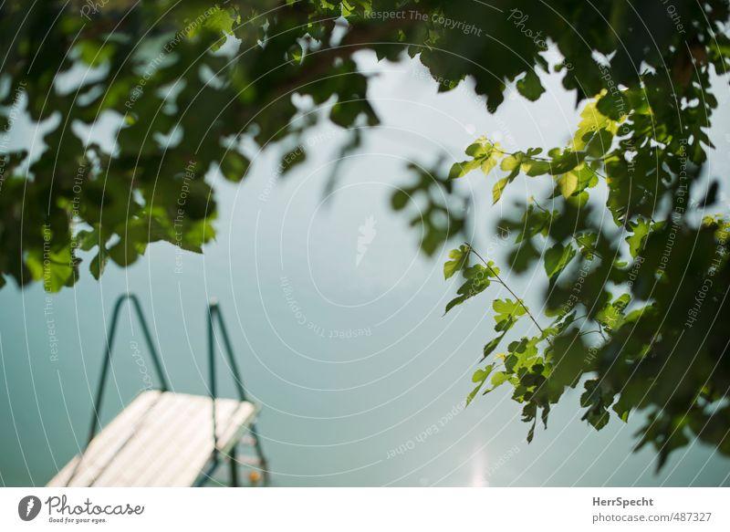 Steg See Maulbeerbaum Natur schön grün Sommer Baum Blatt Umwelt Schwimmen & Baden Garten Schönes Wetter Seeufer sportlich Zweig Wasseroberfläche Durchblick