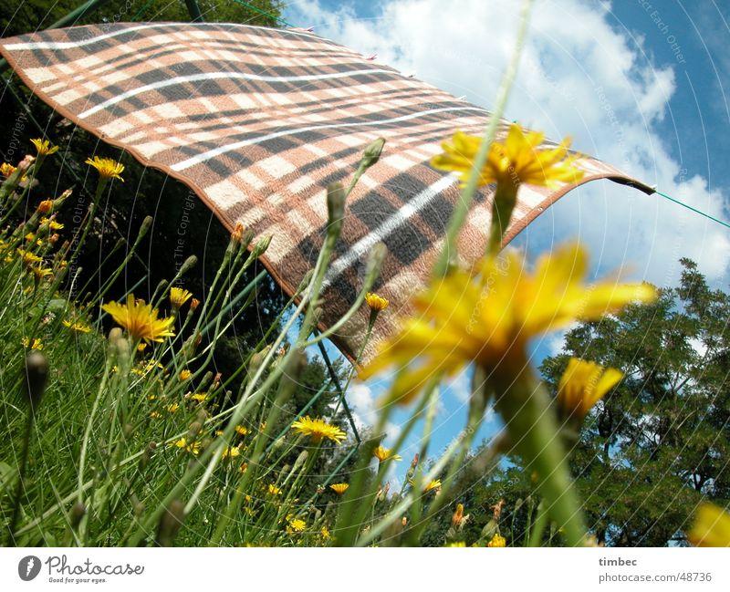 Decke im Wind kariert wehen Bewegung Leidenschaft lau frisch Blume mehrfarbig Fröhlichkeit Löwenzahn Wolken weiß Gras weich grün Baum Holz Wiese Lebensfreude