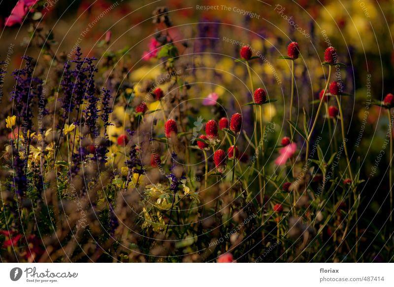abendblüten Natur Pflanze grün Blume Erholung rot ruhig gelb Blüte Garten Park Zufriedenheit Wachstum Blühend Wohlgefühl harmonisch