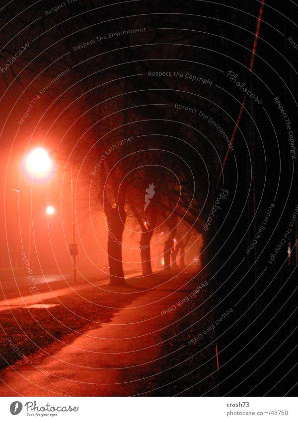 Nebel Baum Straße Kroatien