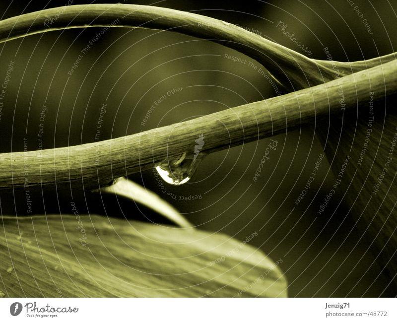 Ginkgo Wasser Baum Blatt Regen Wassertropfen Ast
