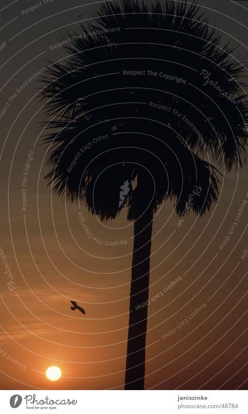 Palmenuntergang Sonne Meer rot Strand Ferien & Urlaub & Reisen ruhig gelb Ferne Erholung Freiheit Wärme Vogel Zukunft Romantik Kitsch Flügel