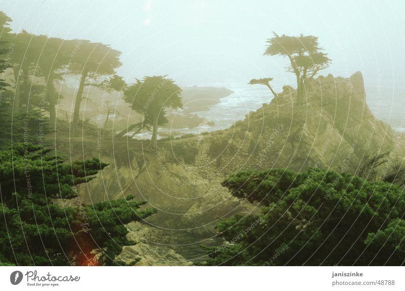 Schroffheit in ihrer schönsten Form! Küste Highway One Amerika Kalifornien Monterey Baum böse gruselig Wellen Wasserwirbel Meer Pazifik braun Licht kalt