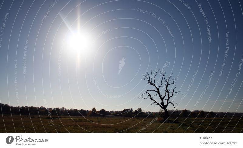 Der Baum ist tot Himmel Sonne Ferne Wiese Tod Gras Ast Zweig