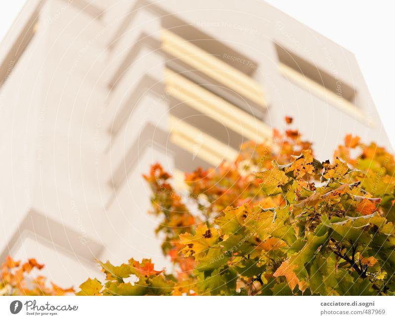 Laubverfärbung Natur Farbe Baum Einsamkeit ruhig Blatt gelb Umwelt Herbst Stimmung orange gold Hochhaus Häusliches Leben hoch Beginn