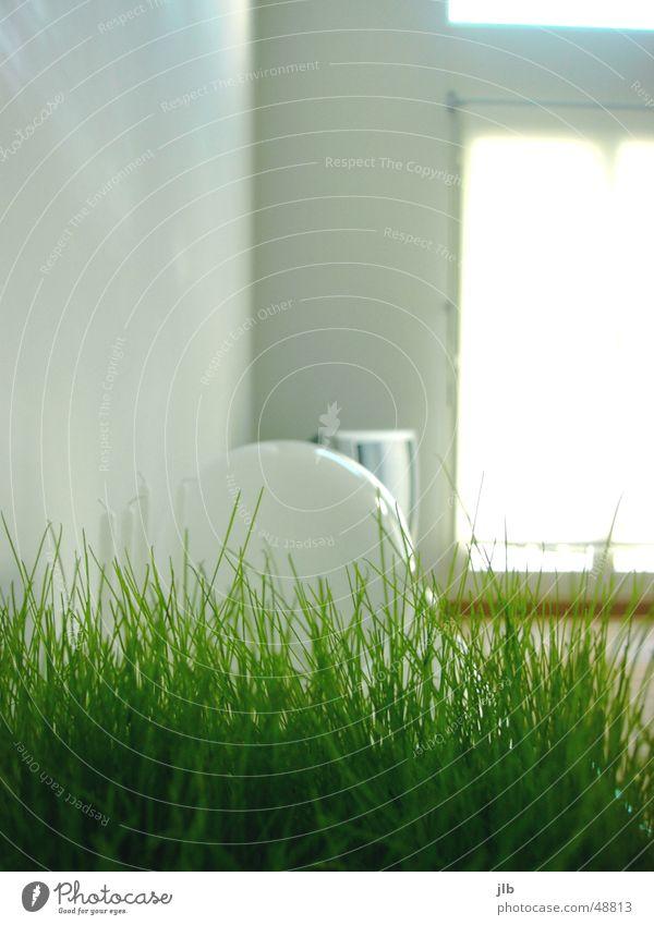 grün wohnen Wohnung Licht Gras weiß Wohnzimmer Lampe Fenster Häusliches Leben Fernsehen Sonne Innenaufnahme