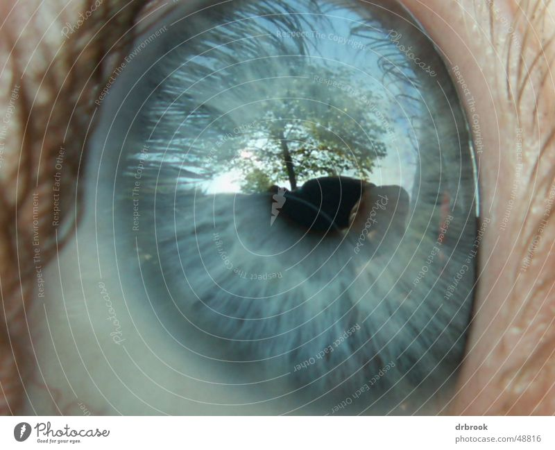Auge Wimpern Baum Pupille Reflexion & Spiegelung Wiese Blatt blaue augen Gesicht Makroaufnahme Himmel Ferne Landschaft detail. liegen Außenaufnahme