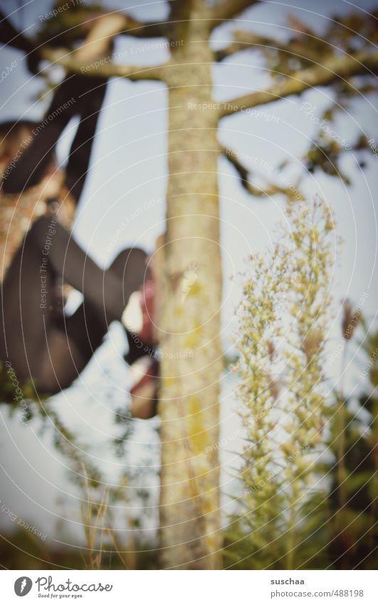 rauf auf den baum 2 Mensch Kind Himmel Natur Baum Umwelt Herbst Holz Gesundheit Beine Kindheit Arme wild Ast festhalten Klettern