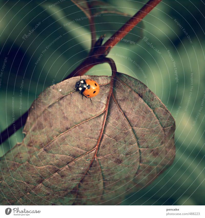 läuft und läuft und läuft... Natur Pflanze ruhig Blatt Tier Leben Herbst Glück braun PKW Zufriedenheit laufen ästhetisch Zeichen Punkt Käfer