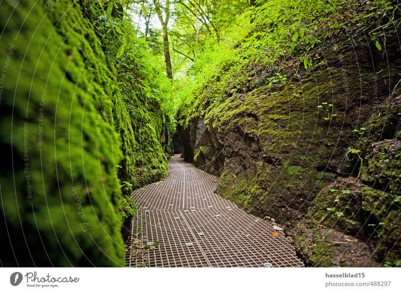 Grüne Hölle Pflanze grün schön Erholung ruhig Tier Frühling Wege & Pfade Gesundheit Glück Lifestyle Felsen Zufriedenheit Tourismus frisch Sträucher