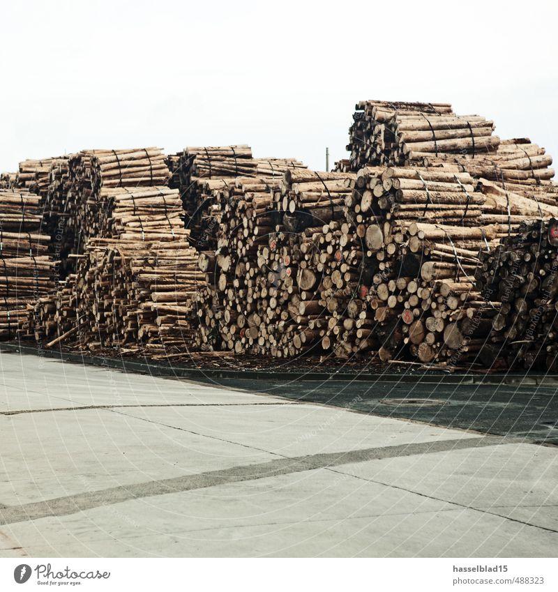 Cellulose Reichtum Klimawandel Baum trocken Baumstamm Lager Bündel Holz ökologisch regenerativ Farbfoto Gedeckte Farben Außenaufnahme Menschenleer