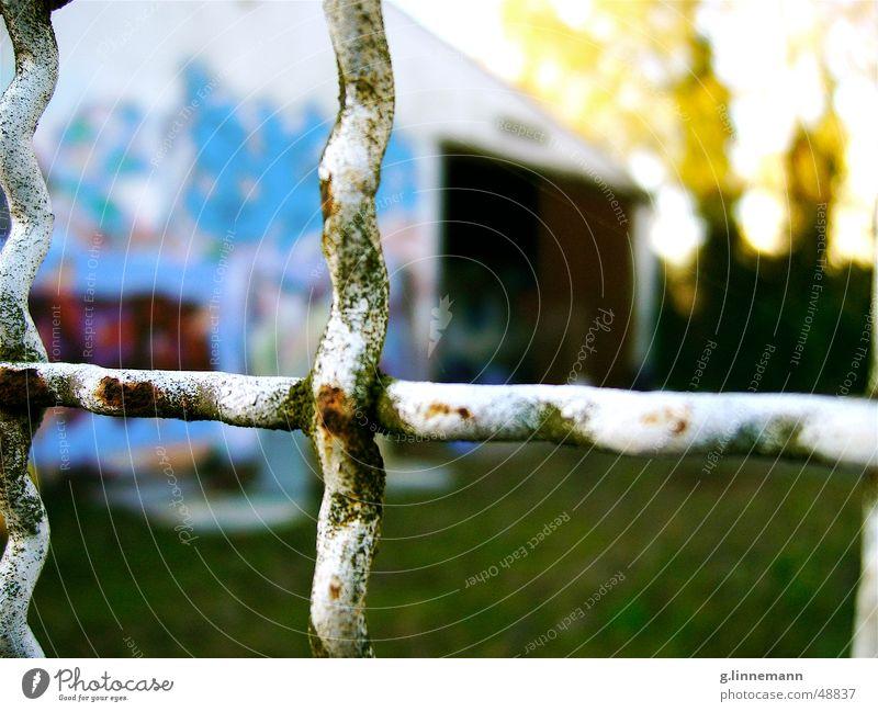 Birke Natur Baum grün blau gelb Herbst Graffiti Wellen Wind geschlossen Rasen Tor Rost Zaun