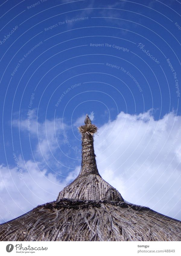 Vogel Taube Wolken Mauritius Dach Strohdach Sommer Physik Nest Strand Strohhütte Himmel blau Wärme Hütte strandhütte