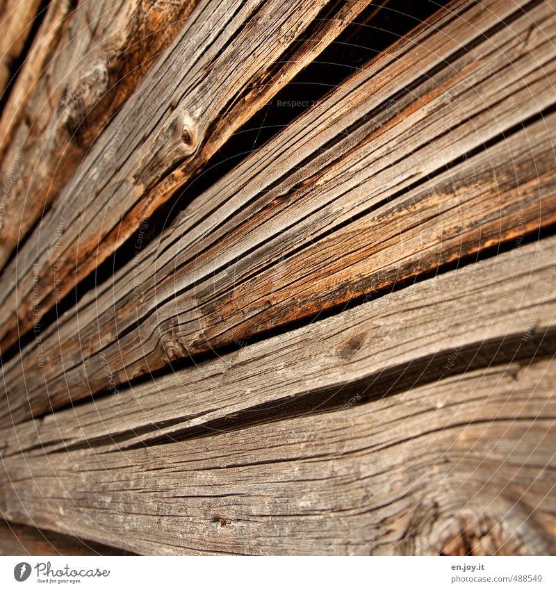Baumschicksal Natur Stadt Umwelt Holz natürlich braun Zukunft Vergänglichkeit Baustelle Landwirtschaft nachhaltig Umweltschutz Forstwirtschaft Symmetrie